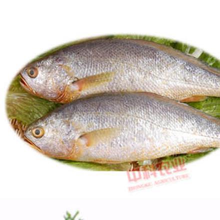 【星龍港】深海純野生黃花魚500g袋