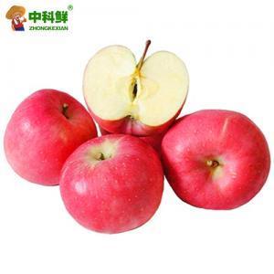 【中科鲜】山东红富士苹果4kg